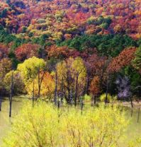 Fall Colors of Kiamichi Mts.