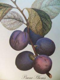 Prune plums, 63 pieces