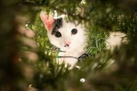 Jack in the tree!