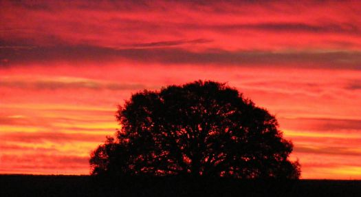 Oak Tree at Sunrise 12302012