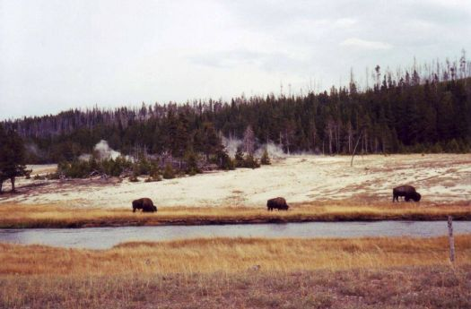 Yellowstone Nat. Park, Wyoming