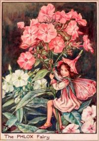 The Phlox Fairy (smaller size)