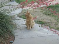 Orange kitty on guard