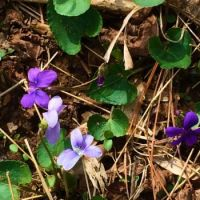 a mix of of violets--challenging