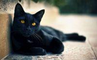 Fekete szépség