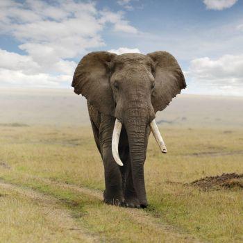 Elephant-Cloudscape