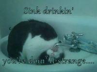 sink drinkin