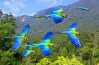 stunning parrots