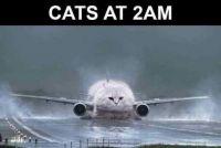 Cats at 2am