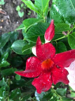 From my garden last year