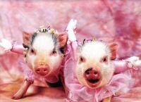ballet pigs