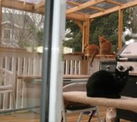 4 Cats On Catio