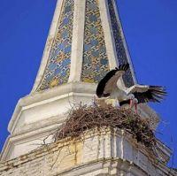 Storks, Almonte church Spain