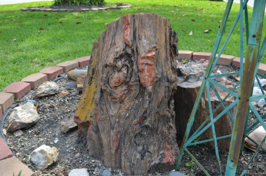 Arizona Petrified Wood 3