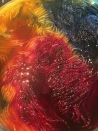 Fiona Sedick's Hand-Dyed Yarn - large
