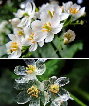The Skeleton Flower
