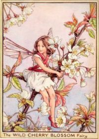 The Wild Cherry Blossom Fairy (mini)