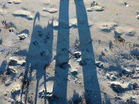 Little dog long shadow