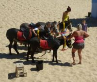 Donkey ride on the beach
