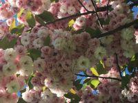 Bouquet of  Blossoms