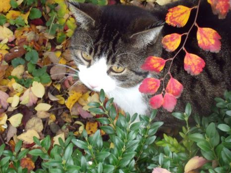 Autumn: Jimmy in coloured leaves