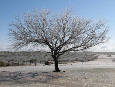 Another picture of the morning after the ice storm in South Texas last winter.  Don't you love the starkness of the mesquite tre