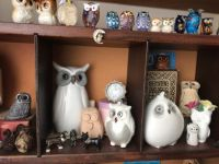 A few members of my Parliament of Owls.