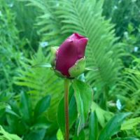 Garden bud