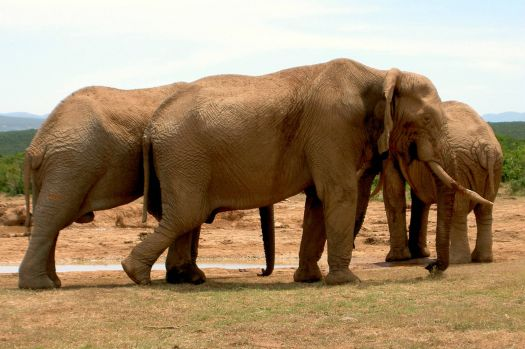 Addo Elephant Park - South Africa (awesome trip)