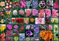 Beautiful flowers of the world