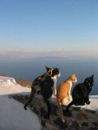 Cat meeting in Santorini