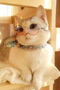Got My Specs on Today - Planning on Doing a Lot of Reading