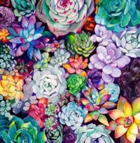 Succulents in Color