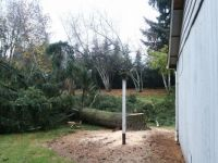 Different View of Tree Down