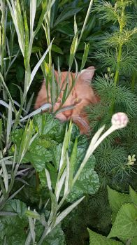Bozo in plants
