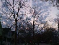 6 Ann Arbor Spring dawn