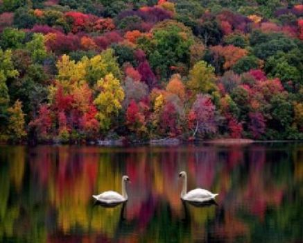 Swan Lake in the Fall