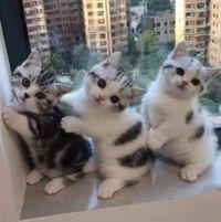 Three times MEOWY HELLO!