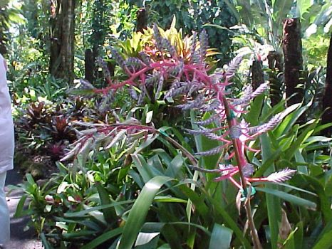 A walk in Hawaii finds many beautiful plants.