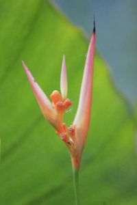 botanical garden Reunion Island