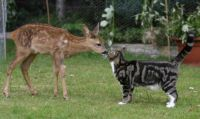Fawn and Moggy