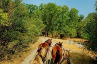 A stagecoach ride in California's Columbia State Historic Park offers a glimpse of Gold Rush life.