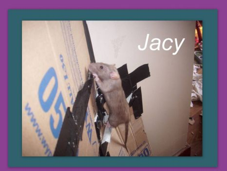Jacy...climbing and chewing the cardboard wall