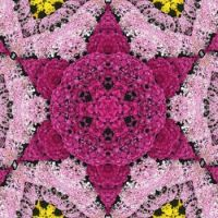 kaleidoscope 183 chrysantheme star small