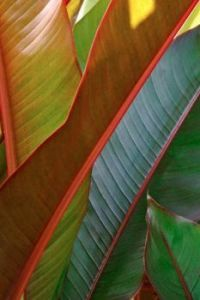 Textures - Tropical Leaves