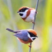 Beautiful Birds - No 41