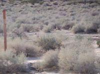 100E0331 Coyote just chillin (AZ)