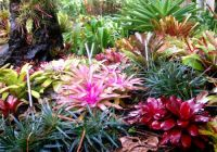 A sections in Cairns Australia Botanical garden, stunning.