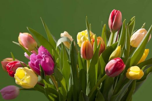 tulips-bouquet-spring-colorful