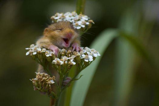 Oh Yeah ! Flowers